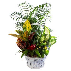 Bella cesta de plantas naturales Edén