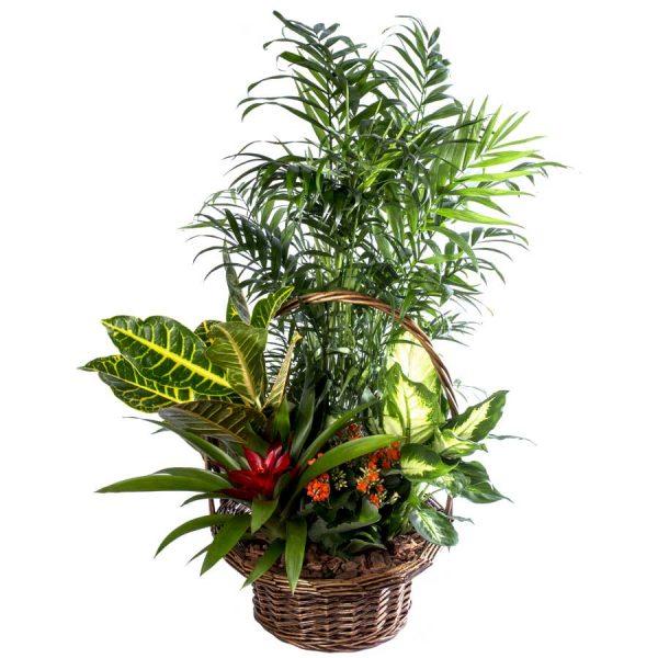 cesta-mimbre-plantas-naturales-selva-1.jpg