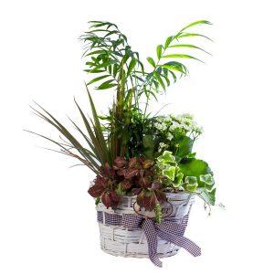 Composición en cesta de plantas naturales