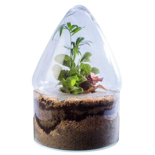 Ecosistema con plantas naturales pirámide