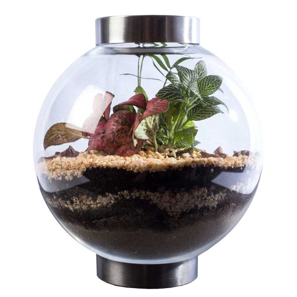 Ecosistema con plantas naturales redondo