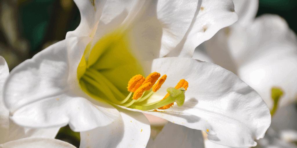 Conoces El Origen Simbolismo Y Significado De La Flor De Lis