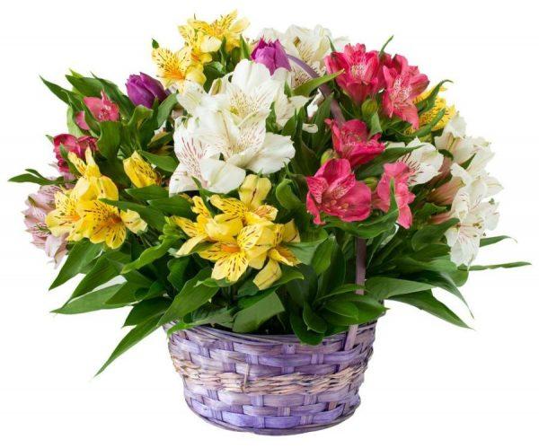 cesta-flores-astromelias
